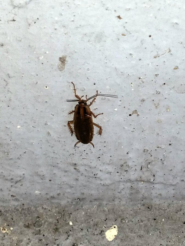kakkerlak-inprema