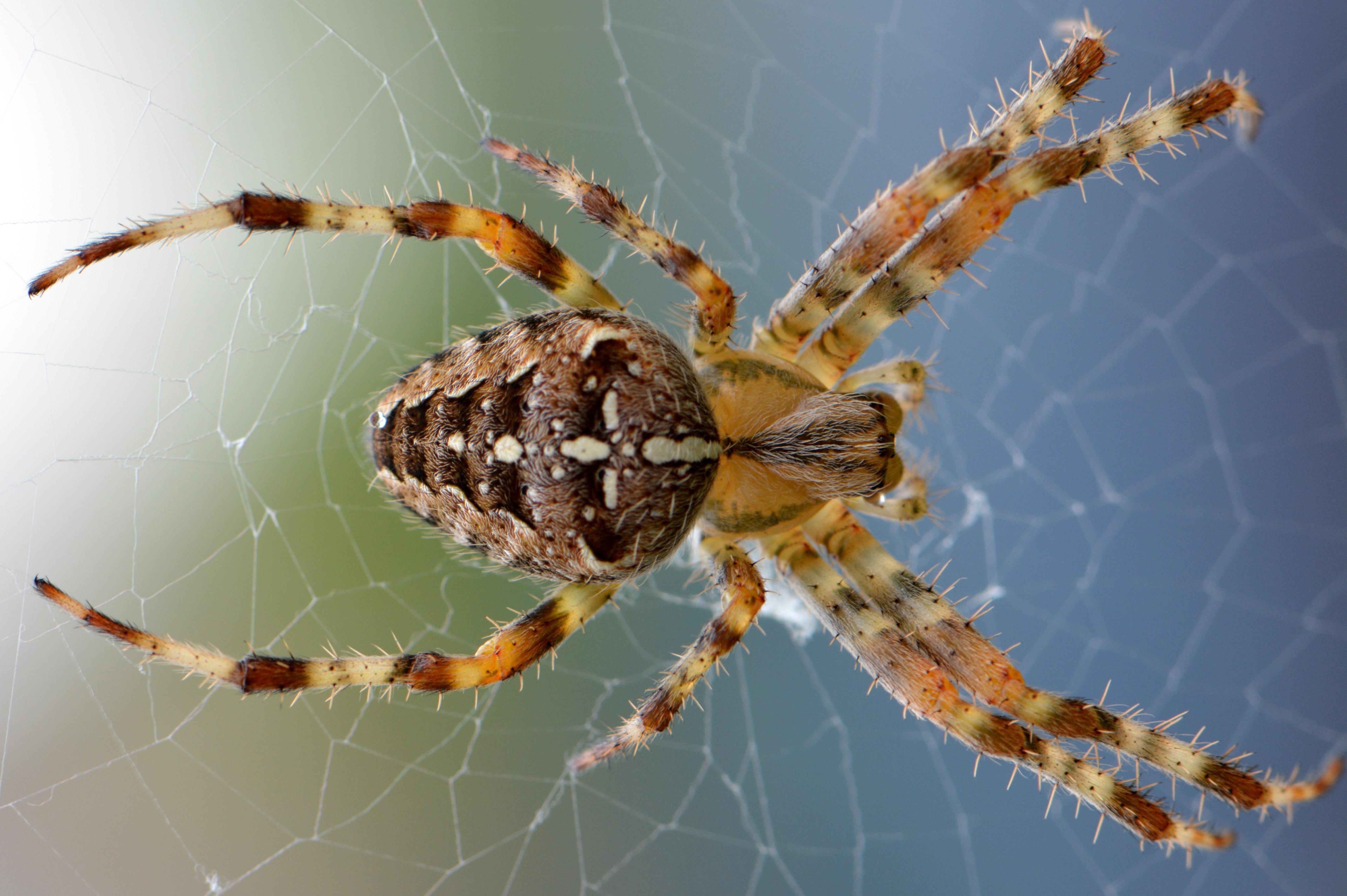 spinnen-inprema